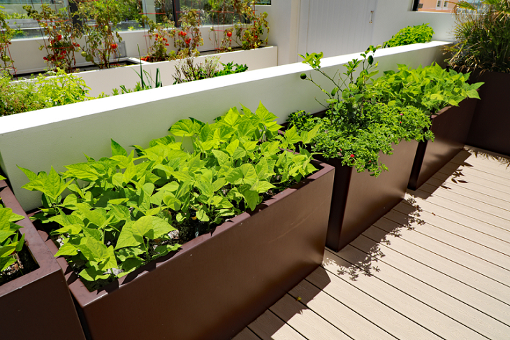 vegetable-planter-boxes