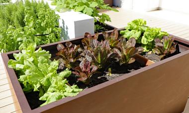 vegetable-planter-boxe